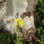 小さな春🎶